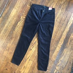 Talbots Velveteen Flawless Five-Pocket Jegging NWT